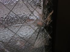 ペアガラスのガラス修理